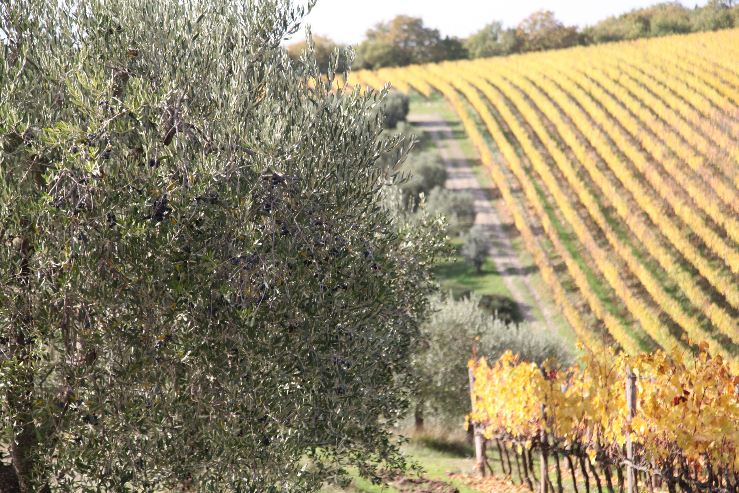 L'oro liquido di Castellina in Chianti